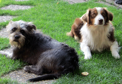 erfahrungsbericht hundefutter trixi durchfall anifit. Black Bedroom Furniture Sets. Home Design Ideas