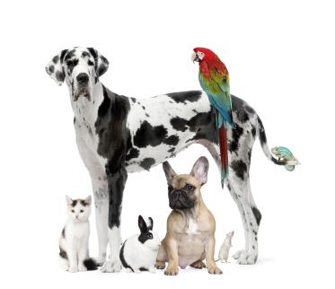 Gruppe von Tieren Bildquelle (c) istock